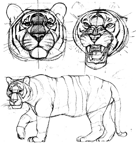 рисуем животных: